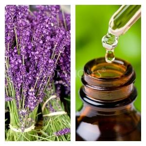 Aceite Esencial de Lavanda Provence