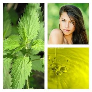 Aceite de Ortiga Verde BIO