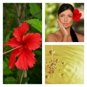Aceite de Hibiscus