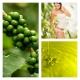 Aceite de Café Verde