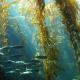 Alga Laminaria BIO en Polvo