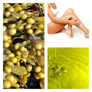 Aceite de Algas Marinas (Fucus)