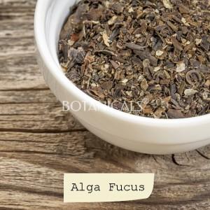 Alga Fucus (en trozos)