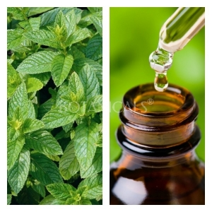 Aceite Esencial de Hierbabuena