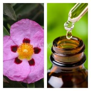 Aceite Esencial de Jara (Absoluto Diluido)