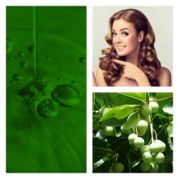 Aceite de Tamanu ó Calófilo BIO