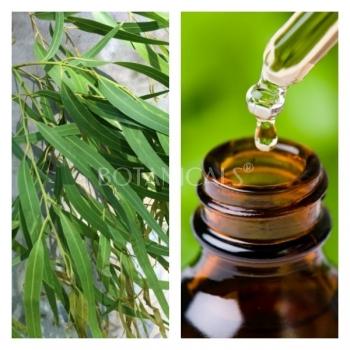 Aceite Esencial de Eucalipto Citriodora