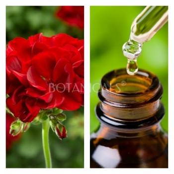 Aceite Esencial de Geranio Egipcio Bio