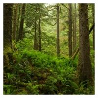 Esencia de Bosque y Musgo