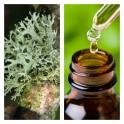 Aceite Esencial de Musgo de Roble (Absoluto Diluido)