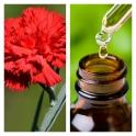 Aceite Esencial de Clavel (Absoluto Diluido)