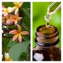 Aceite Esencial de Frangipani (Absoluto Diluido)