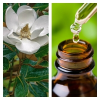 Aceite Esencial de Magnolia (Absoluto Diluido)