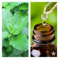 Aceite Esencial de Melisa (Absoluto Diluido)