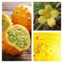 Aceite de Melon de Kalahari BIO