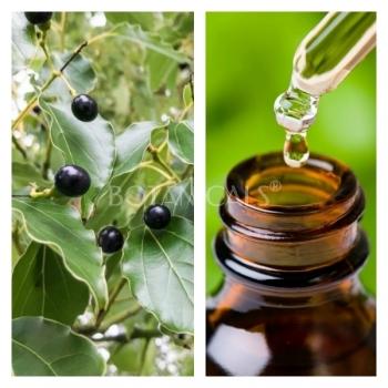 Aceite Esencial de Ravintsara BIO