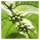 Extracto de Café Verde BIO