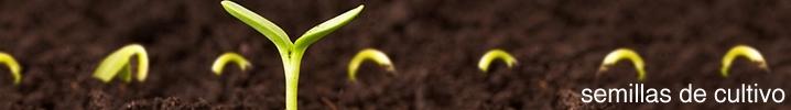 Semillas de Cultivo